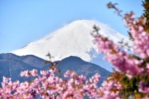 松田山の河津桜越しの富士山の写真素材 [FYI04097193]