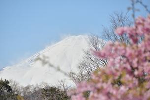 松田山の河津桜越しの富士山の写真素材 [FYI04097194]