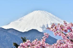 松田山の河津桜越しの富士山の写真素材 [FYI04097197]