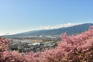 松田山の河津桜越しの松田市街の写真素材 [FYI04097200]