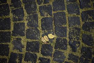 落ち葉と石畳の写真素材 [FYI04097528]