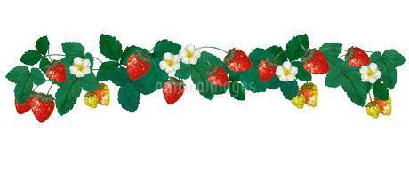 苺の水彩画のイラスト素材 [FYI04097537]