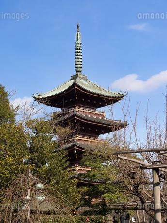 上野 旧寛永寺五重塔の写真素材 [FYI04097780]