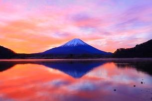 精進湖より富士山と朝焼けの写真素材 [FYI04098039]