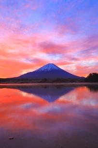 精進湖より富士山と朝焼けの写真素材 [FYI04098041]