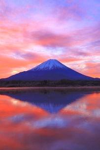 精進湖より富士山と朝焼けの写真素材 [FYI04098042]