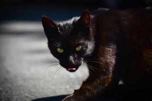黒猫の写真素材 [FYI04098392]