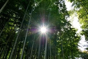 逆光の光が差込む竹林の写真素材 [FYI04098499]