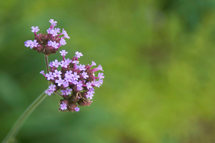 花の写真素材 [FYI04098851]