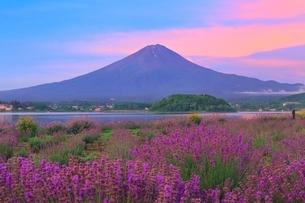 河口湖よりラベンダーと富士山の写真素材 [FYI04098973]
