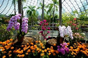 とっとり花回廊,フラワ-ド-ムの写真素材 [FYI04099011]