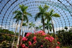 とっとり花回廊,フラワ-ド-ムの写真素材 [FYI04099014]