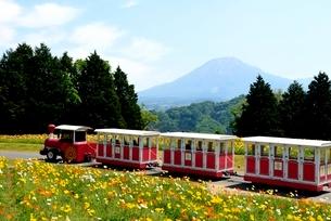 新緑,とっとり花回廊,花の丘フラワ-トレインと大山の写真素材 [FYI04099025]