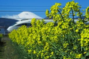 菜の花畑と富士山と小田急ロマンスカーVSEの写真素材 [FYI04099595]