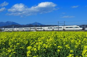 菜の花畑と小田急ロマンスカーVSEの写真素材 [FYI04099596]