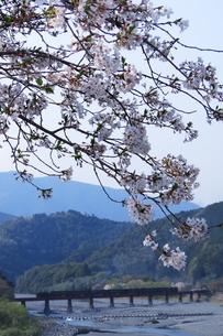大井川鉄道のSL(大井川第一橋梁)の写真素材 [FYI04099615]