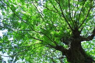 森林浴の写真素材 [FYI04099632]
