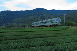 茶畑のそばを走る大井川鉄道ズームカーの写真素材 [FYI04099648]