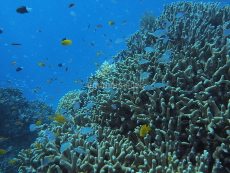 沖縄の海の写真素材 [FYI04100084]