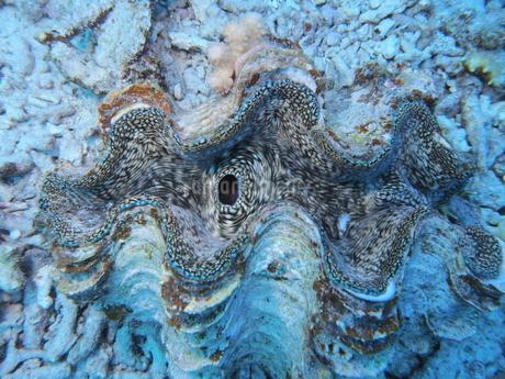 シャコ貝の写真素材 [FYI04100089]