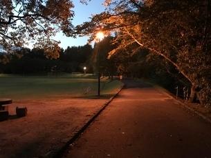 夕暮れの公園の写真素材 [FYI04100222]