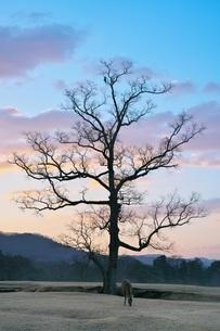 冬の早朝の奈良公園・飛火野の鹿の写真素材 [FYI04100304]