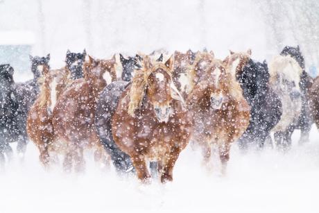 冬の馬の写真素材 [FYI04100324]