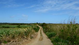 轍のある田舎の道の写真素材 [FYI04100447]