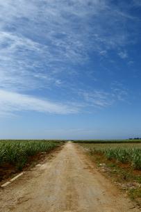 1直線の農道の写真素材 [FYI04100448]