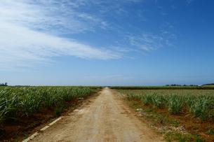 1直線の農道の写真素材 [FYI04100449]