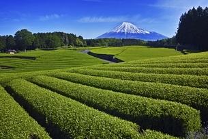 茶畑と富士山の写真素材 [FYI04100556]