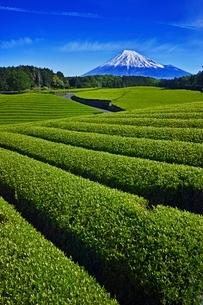 茶畑と富士山の写真素材 [FYI04100557]