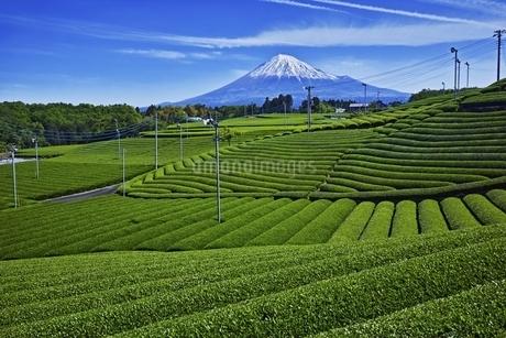 茶畑と富士山の写真素材 [FYI04100560]