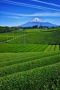 茶畑と富士山の写真素材 [FYI04100561]