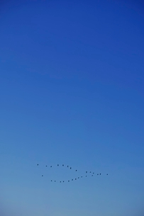 渡り鳥の群れの写真素材 [FYI04100596]