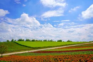 花畑と青空の写真素材 [FYI04100769]