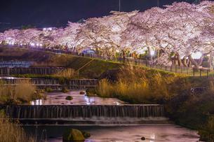 宮城野早川堤の桜の写真素材 [FYI04100893]