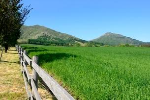 新緑,蒜山高原,ジャ-ジ-牧場の写真素材 [FYI04100945]