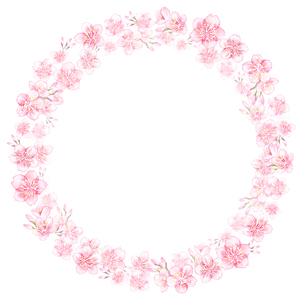 水彩で描いた桜のリースのイラスト素材 [FYI04101231]