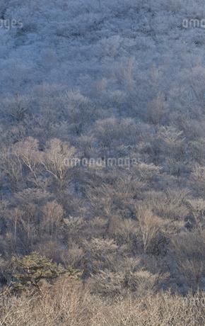 冬景色の写真素材 [FYI04101492]