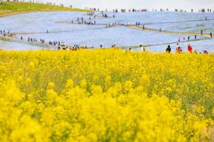 ひたち海浜公園の写真素材 [FYI04101558]