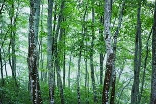 雑木林の写真素材 [FYI04101611]