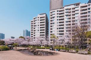 桜満開の中央区佃、月島の春の写真素材 [FYI04101651]