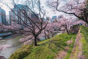 桜満開の春の千鳥ヶ淵の写真素材 [FYI04101694]