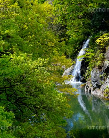高津戸峡 新緑の写真素材 [FYI04101735]