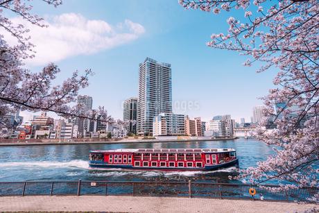 桜満開の隅田川の春の写真素材 [FYI04101759]