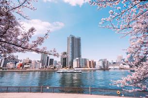 桜満開の隅田川の春の写真素材 [FYI04101760]