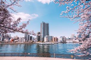 桜満開の隅田川の春の写真素材 [FYI04101762]