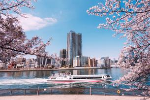 桜満開の隅田川の春の写真素材 [FYI04101765]