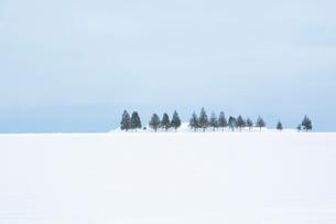 雪原に一列に並んだ防雪林の写真素材 [FYI04101787]